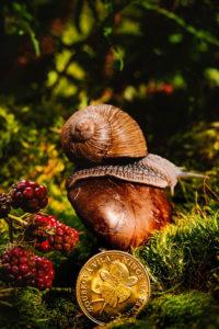 Zoubková víla-mince na památku