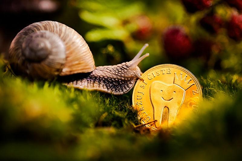 Zoubková víla-mince